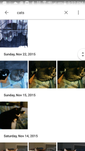 Cat search in Google Photos app